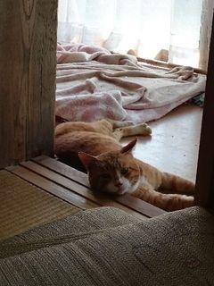 こてつという野良猫が住んでいた件